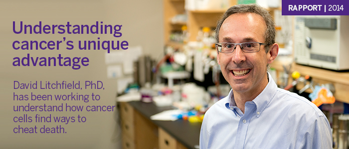 David Litchfield, PhD, has been working to understand how cancer cells find ways to cheat death